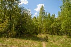 Clairière ensoleillée dans la forêt verte de ressort Photos libres de droits