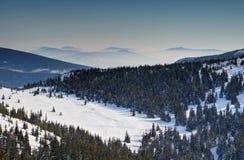 Clairière neigeuse ensoleillée de forêt avec les montagnes floues Babia Gora Poland images libres de droits