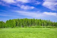 Clairière sur le fond de la forêt de bouleau photographie stock libre de droits