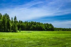 Clairière sur le fond de la forêt de bouleau image stock