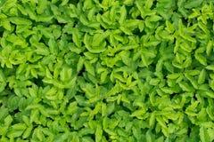 Clairière vert clair dans les bois Photos stock