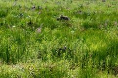 Clairières, envahies avec l'herbe verte et le saule-thé après déboisement images stock