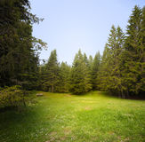 Clairière d'herbe dans la forêt Photos libres de droits