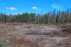 Clairière de forêt après l'abattage des arbres Photo stock
