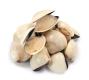 clam в реальном маштабе времени Стоковые Изображения