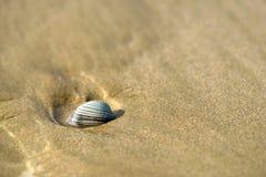 clam на песке Стоковые Изображения