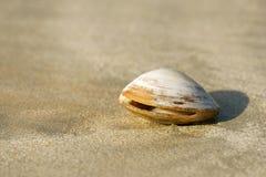 clam на песке Стоковые Изображения RF