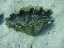 clam открытый стоковое фото rf
