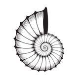 Clam раковины моря иллюстрация вектора