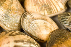 Clam background Royalty Free Stock Photos