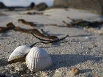 Clam On The Beach Imágenes de archivo libres de regalías