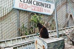 Clam chowder de espera do gato Fotografia de Stock Royalty Free