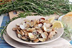 Clam dish Royalty Free Stock Image