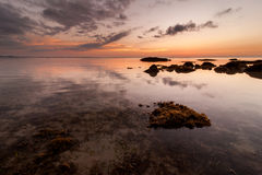 Clam golden sunset with seaweed. Royalty Free Stock Image