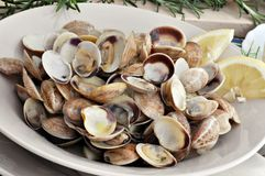 Clam with lemon Royalty Free Stock Photography