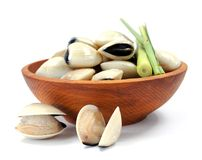 Clam Stock Photography