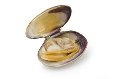 Clam open Royalty Free Stock Photography