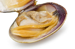 Clam open cooked Stock Photos