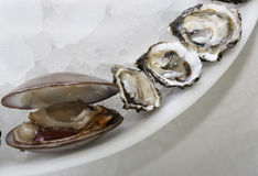 Clam and oysters. Clam and oyseters over crushed ice Stock Photo
