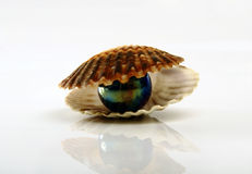 Clam with per it Royalty Free Stock Image