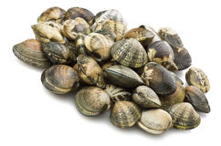 Clam raw Royalty Free Stock Image