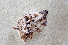 Clam on Sand Royalty Free Stock Photography