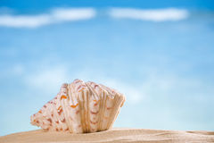 Clam seashell  with ocean , beach and seascape Stock Photography