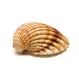 Clam Shell Stock Photos