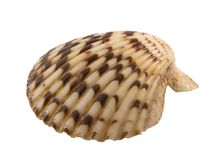 Clam shell Royalty Free Stock Photography