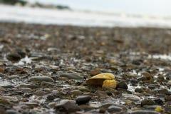 shell stock image