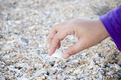 Clam Shell Photo stock