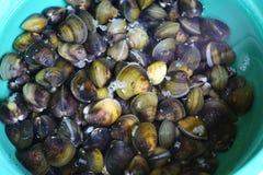 Clam Shell Image libre de droits