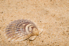 Clam Shell Royalty Free Stock Image
