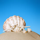 Clam shell on the beach Stock Photos
