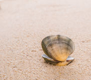 Clam Shell On Beach Sand II Stock Image