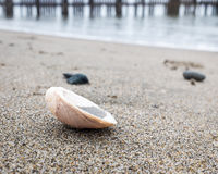 Shell on the beach. With the water line and pier pilings out of focus in the background stock photography
