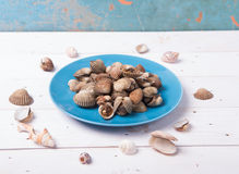 Clam with shell on a blue plate on a white wood background with chilli and tomato sauce. On wood base Stock Images