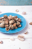 Clam with shell on a blue plate on a white wood background with chilli and tomato sauce. On wood base Royalty Free Stock Image