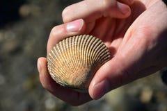Clam Shell Close Up Fotografia de Stock