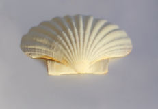 Clam shell Royalty Free Stock Photo