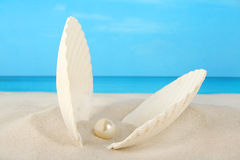 Clam shell containing a pearl on the beach Royalty Free Stock Images