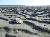 Clam Shell nella sabbia fotografia stock