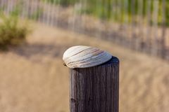 Shell on Post royalty free stock image
