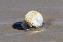 Clam shell Royalty Free Stock Photos