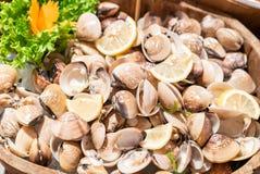 Clam Shell Seafood sur la glace photographie stock libre de droits