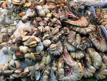 Clam shell shrimp seafood market with ice. In seafood market Stock Photos