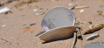 Clam Shell. On a Staten Island beach Stock Photography