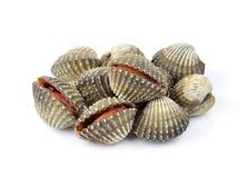 Clam shellfish food on white background Stock Photography