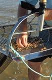 Clam shellfishermen on the coast of Huelva, Andalusia, Spain Royalty Free Stock Photography
