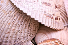 Clam shells Stock Photos